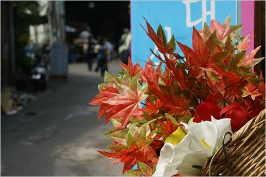 가을의 한가운데, 인사동에서 소니를 만나다!