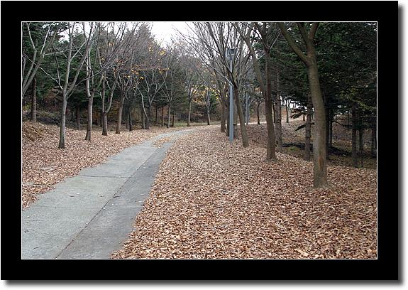 독립기념관 낙엽