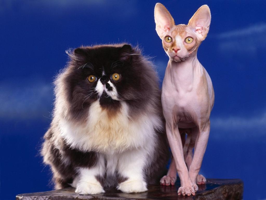 고양이 바탕화면