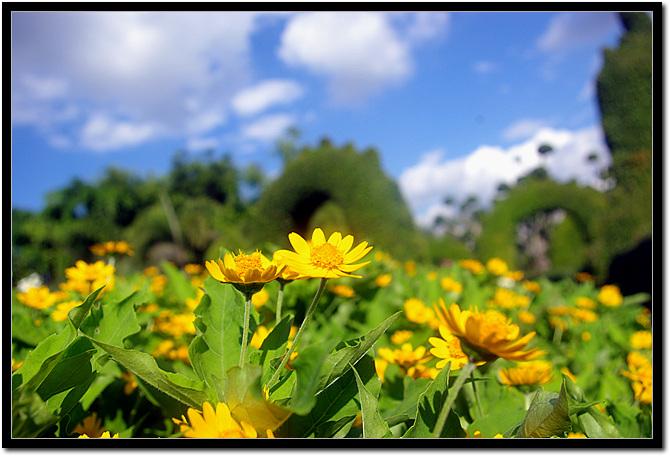 치앙마이 보타닉 가든 꽃 풍경