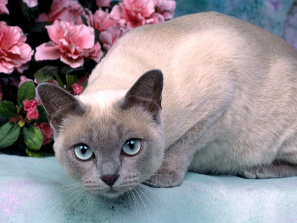 cat, 고양이, 고양이 바탕화면, 고양이 바탕화면 모음, 고양이 배경화면, 고양이 시리즈, 고양이 이야기, 고양이바탕화면, 고양이배경화면, 고양이사진, 고화질 고양이 바탕화면, 고화질 고양이 사진, 귀여운 고양이, 깜찍한 고양이, Wallpapers, HD Wallpapers