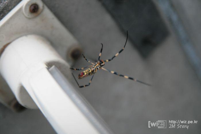 도로 위에 집 짓는 거미